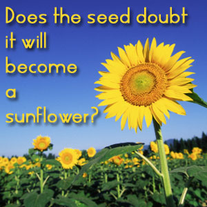 Does the seed doubt it will become a sunflower?