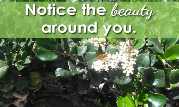 Notice the beauty around you