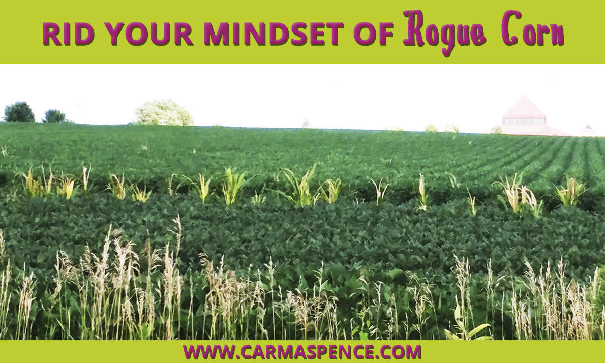Rid Your Mindset of Rogue Corn